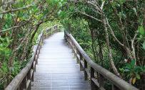 マングローブツアー&遊歩道散策