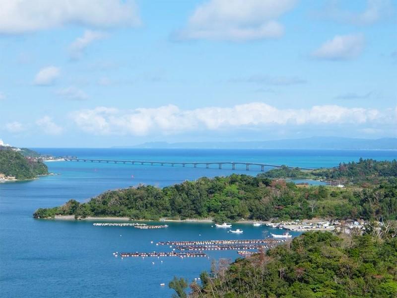 沖縄,やんばる,観光,橋の駅リカリカワルミ,リカリカワルミ,今帰仁村,絶景